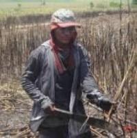 L'impatto ambientale e sociale della produzione di agrocombustibili
