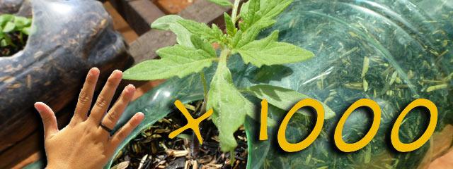 Banner sul 5 per 1000 2012 e l'idroponia